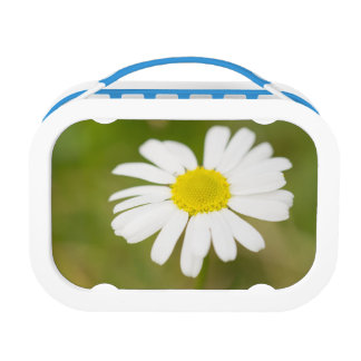 Oxeye Daisy Lunch Box