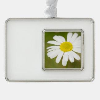 Oxeye Daisy Ornament