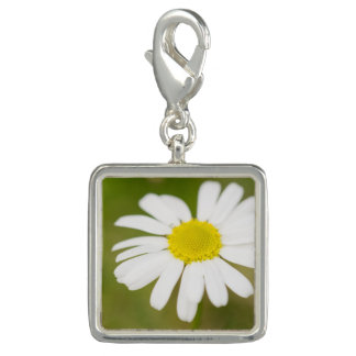 Oxeye Daisy Photo Charms