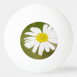 Oxeye Daisy Ping-Pong Ball