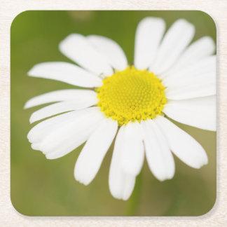 Oxeye Daisy Square Paper Coaster