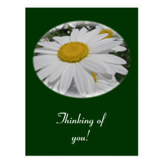"Oxeye Daisy Wildflower ""Thinking of you"" Postcard"