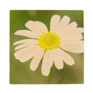 Oxeye Daisy Wooden Coaster