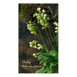 Oxlip wildflowers Horticultural business card