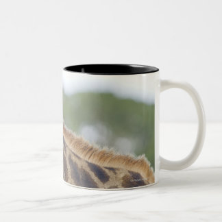 Oxpeckers on Giraffe, Kruger National Park, Two-Tone Coffee Mug