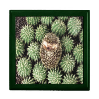 Oxygentees Cactus Jewelry Boxes