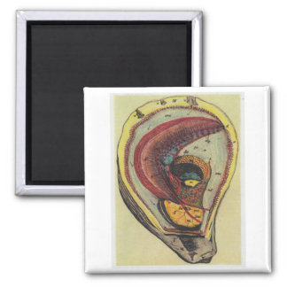 oyster 2 inch square magnet