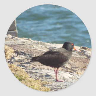 oyster bird by the jetty classic round sticker