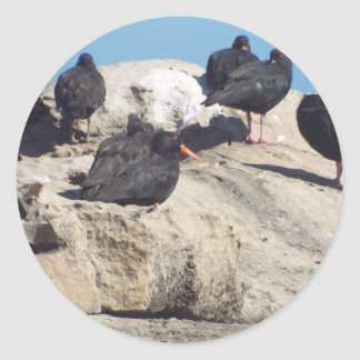 OYSTER BIRDS ROOSTING CLASSIC ROUND STICKER