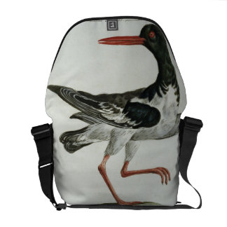 Oyster Catcher, c.1767-76 (hand coloured engraving Courier Bag