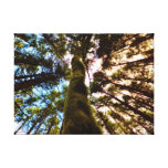 Oyster Dome Woods Canvas Gallery Wrap Canvas