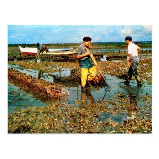 Oyster farm, Charente Maritime Postcard
