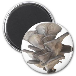 Oyster Mushroom Magnet