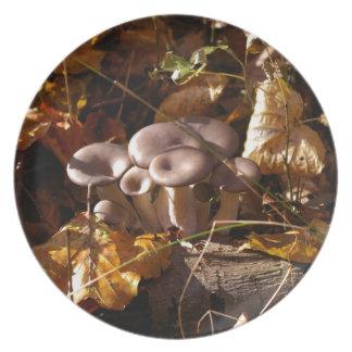 Oyster mushroom plate