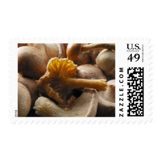 Oyster mushrooms, shiitake mushrooms, chestnut postage stamp