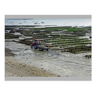 Oyster Park Cancale Brittany France Postcard