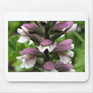 Oyster plant flower in bloom mouse pad