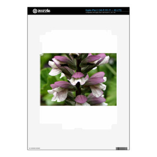Oyster plant flower in bloom skins for iPad 3