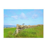 Oystercatcher in Orkney Stretched Canvas Prints
