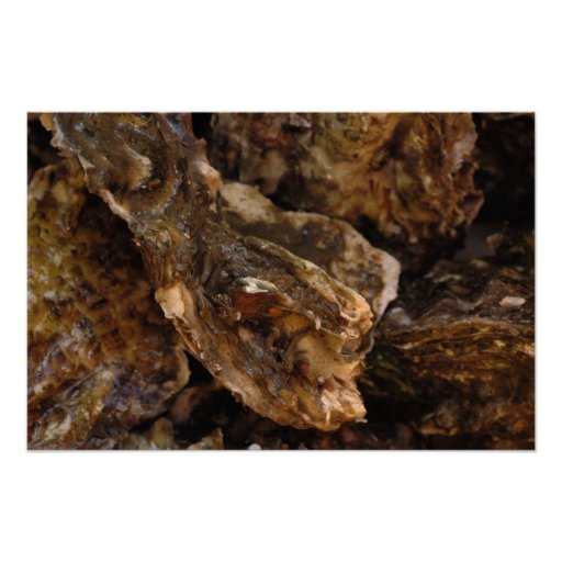 oysters print
