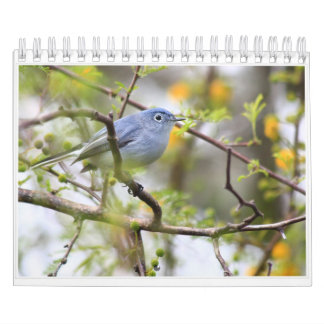 Ozark Birds of Spring and Summer Calendar