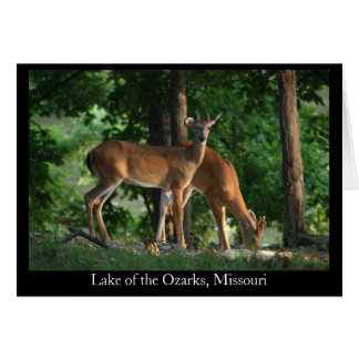 Ozark Deer (Title) Cards