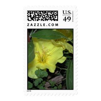 Ozark Sundrops Evening Primrose Postage Stamps