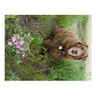 P0003 Flatlandersam by Wild Roses Postcard