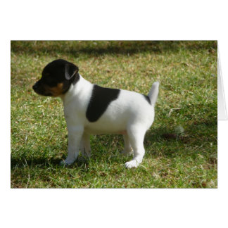 P1010024 Rat Terrier puppy Stationery Note Card