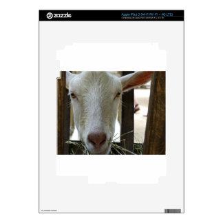P1100078.JPG iPad 3 SKIN