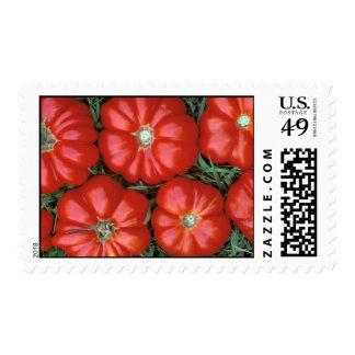P1950B_Italian tomatoes-Edit-Edit_Zazzle Postage Stamp