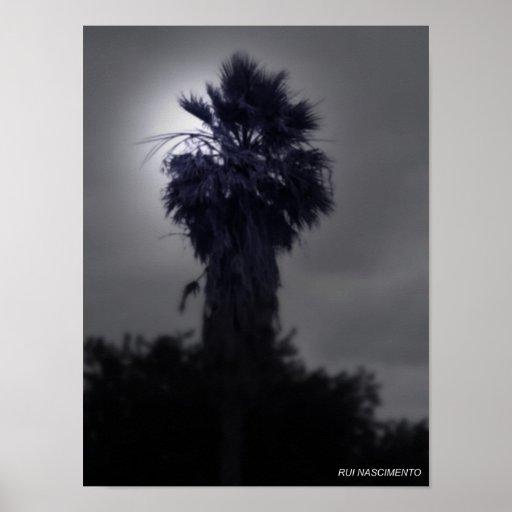 P19 - Midnight Posteres