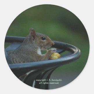 P5269-Squirrel Pegatina Redonda