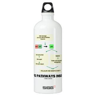 P53 Pathways Inside (Cell Molecular Biology) Aluminum Water Bottle