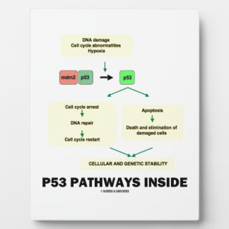 P53 Pathways Inside (Cell Molecular Biology) Plaque