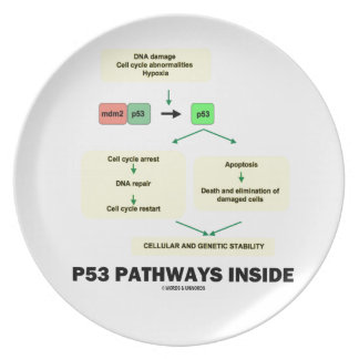 P53 Pathways Inside (Cell Molecular Biology) Dinner Plates