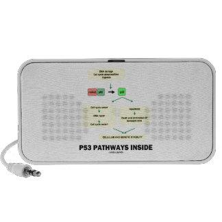 P53 Pathways Inside (Cell Molecular Biology) Travelling Speaker