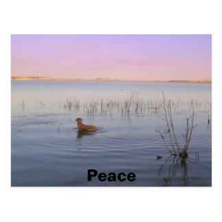 P8020079, Peace Postcard