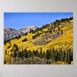 P9270030 - Colina de Aspen de oro Impresiones