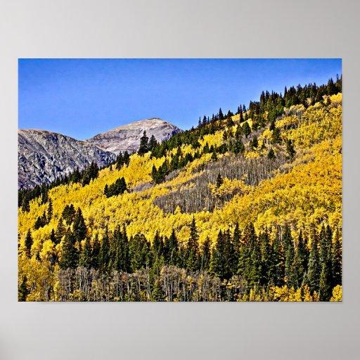 P9270030 - Hill of Golden Aspen Poster