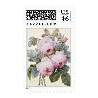 P J Redoute Bourbon Rose Postage Stamp