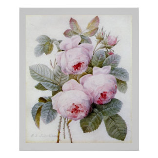 P.J. Redoute Bourbon Rose Poster