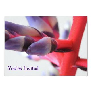 © P Wherrell Aechmea bromeliad flower invitation
