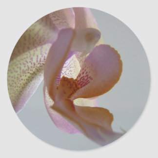 © P Wherrell Angelic pink and yellow orchid photo Classic Round Sticker