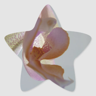 © P Wherrell Angelic pink and yellow orchid photo Star Sticker
