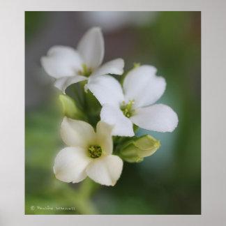 © P Wherrell Beautiful Fine art floral photograph Print