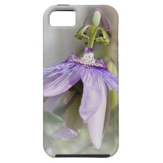 © P Wherrell Beautiful pale purple passion flower iPhone 5 Covers