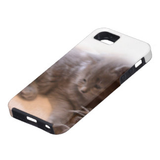 © P Wherrell Cute long haired grey kitten iPhone SE/5/5s Case