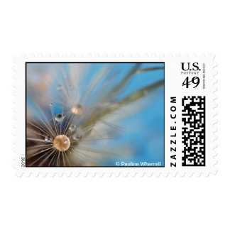 © P Wherrell Dandelion seeds and water photograph Postage Stamps