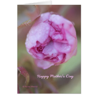 © P Wherrell Mother's day Fine art photo blossom Greeting Cards